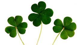 irish-clover-lyme-disease-uk