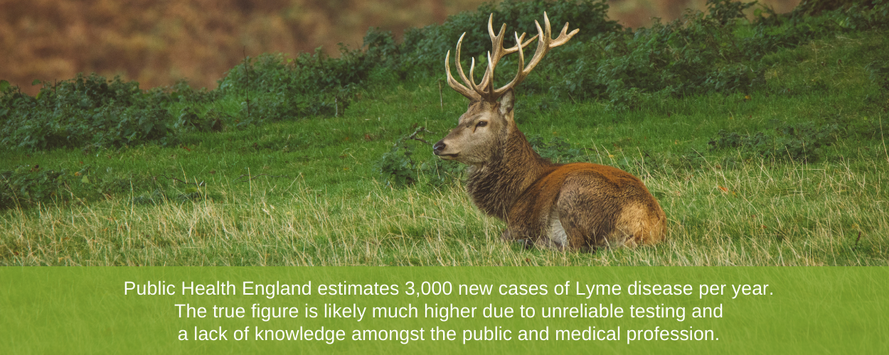 Public Health England estimates 3,000 new cases of Lyme disease per year. The true figure is likely much higher due to unreliable testing and a lack of knowledge amongst the public and medical profession.